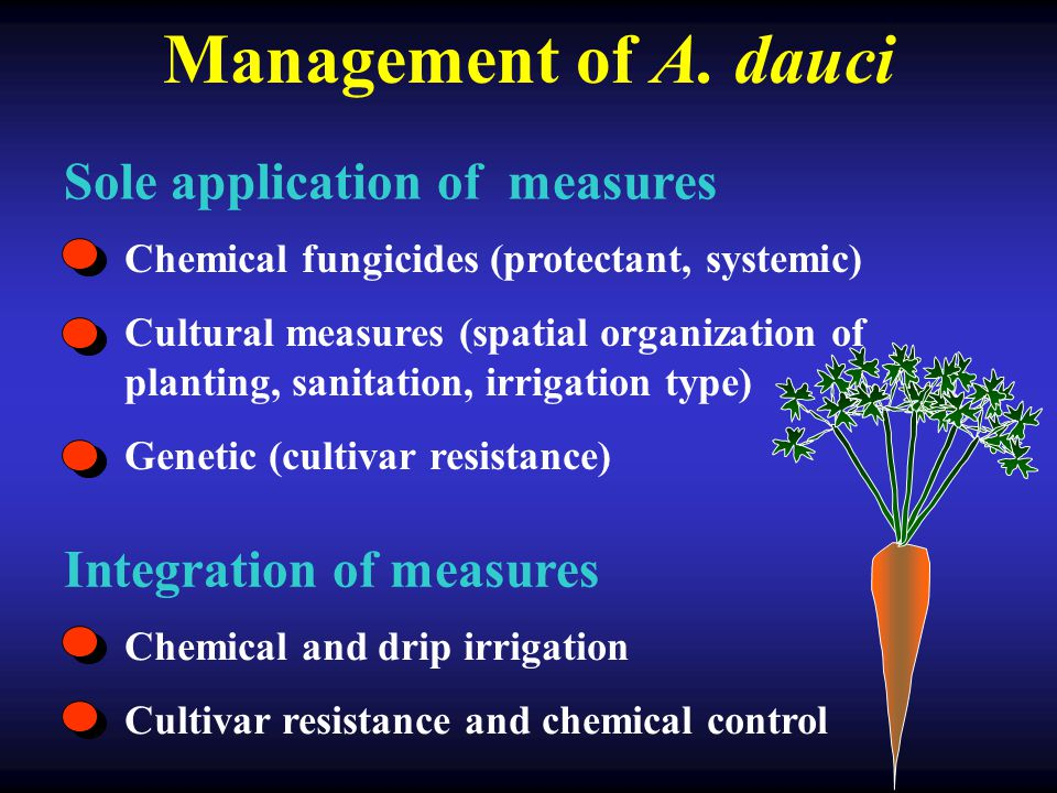 Management of A. dauci Sole application of measures