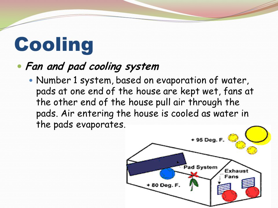 Cooling Fan and pad cooling system