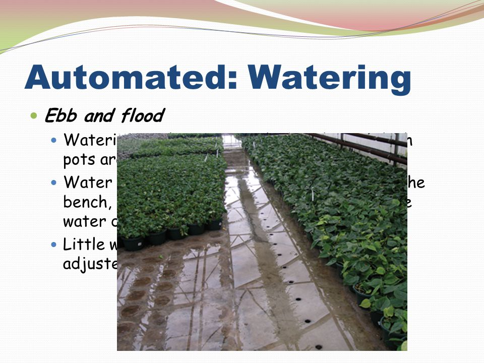 Automated: Watering Ebb and flood