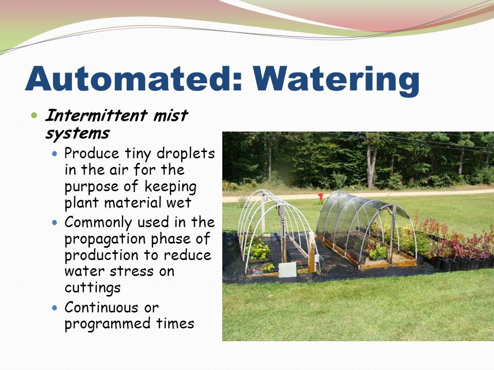 Automated: Watering Intermittent mist systems