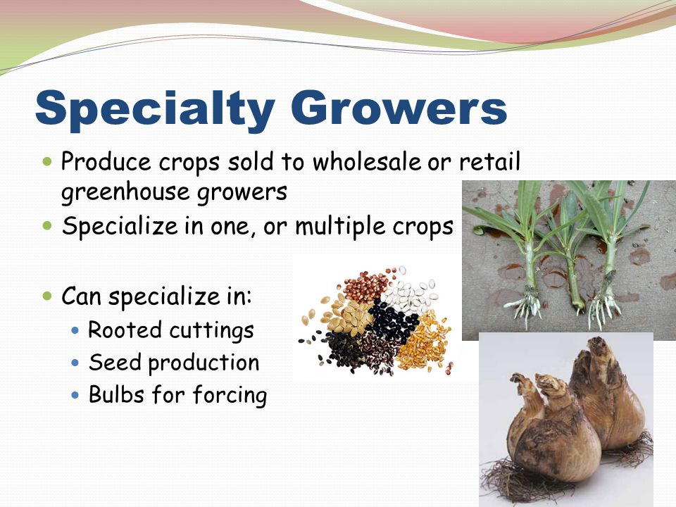 Specialty Growers Produce crops sold to wholesale or retail greenhouse growers. Specialize in one, or multiple crops.