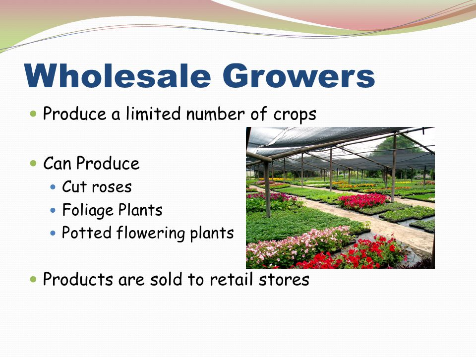Wholesale Growers Produce a limited number of crops Can Produce