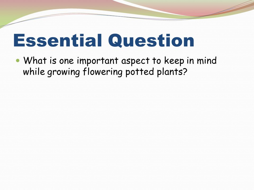 Essential Question What is one important aspect to keep in mind while growing flowering potted plants
