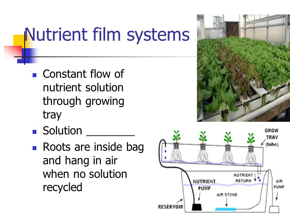 Nutrient film systems Constant flow of nutrient solution through growing tray. Solution ________.