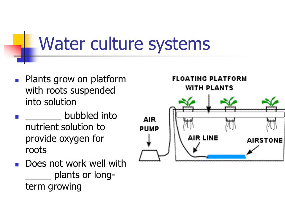 Water culture systems Plants grow on platform with roots suspended into solution. _______ bubbled into nutrient solution to provide oxygen for roots.