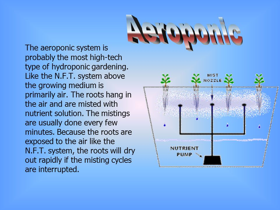 Aeroponic