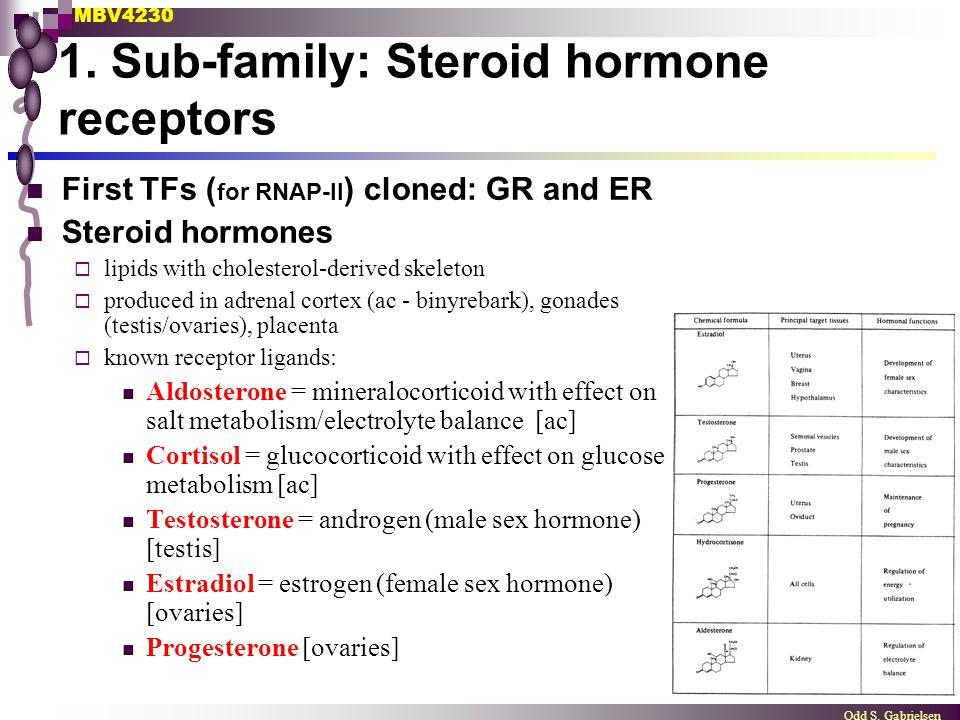 1. Sub-family: Steroid hormone receptors