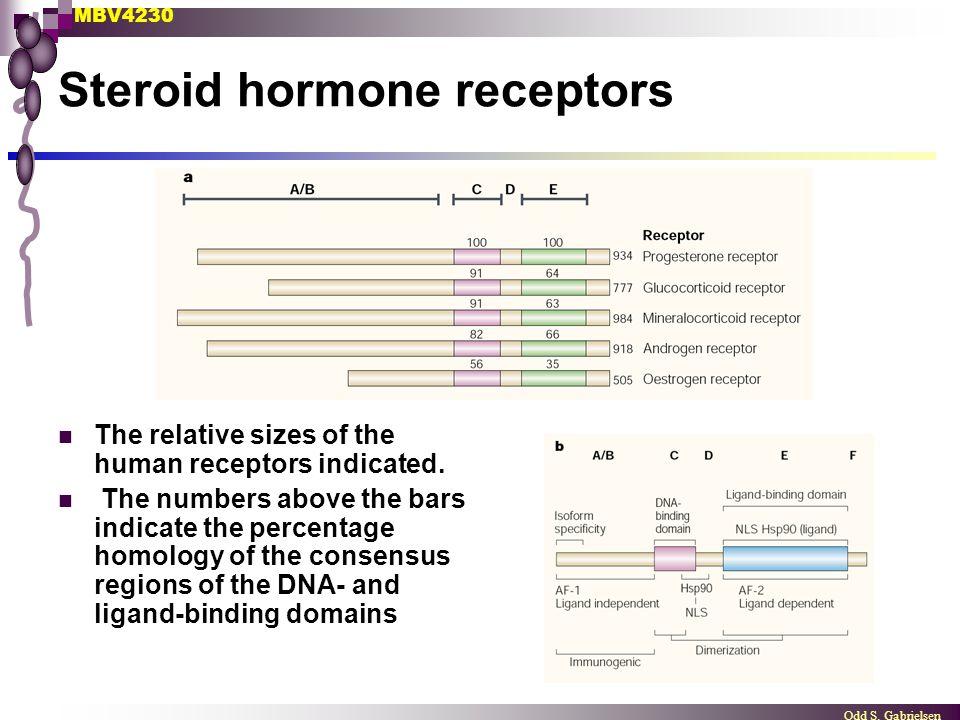 Steroid hormone receptors