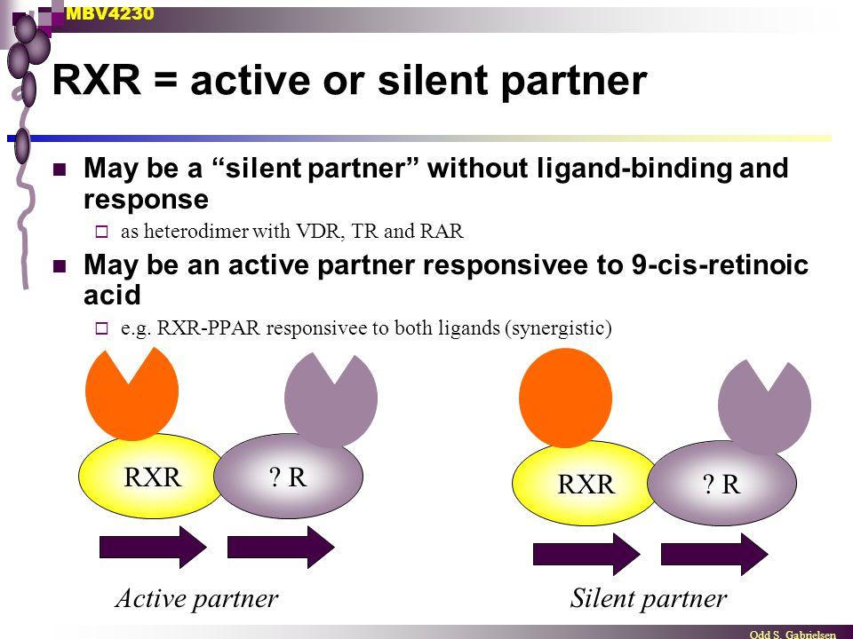 RXR = active or silent partner