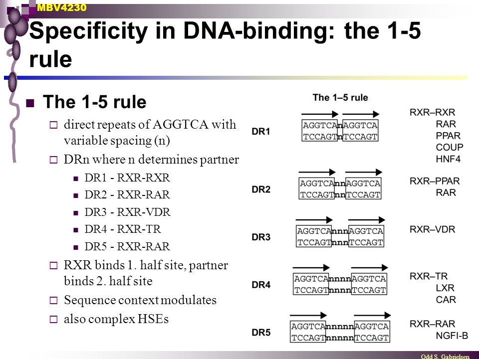 Specificity in DNA-binding: the 1-5 rule