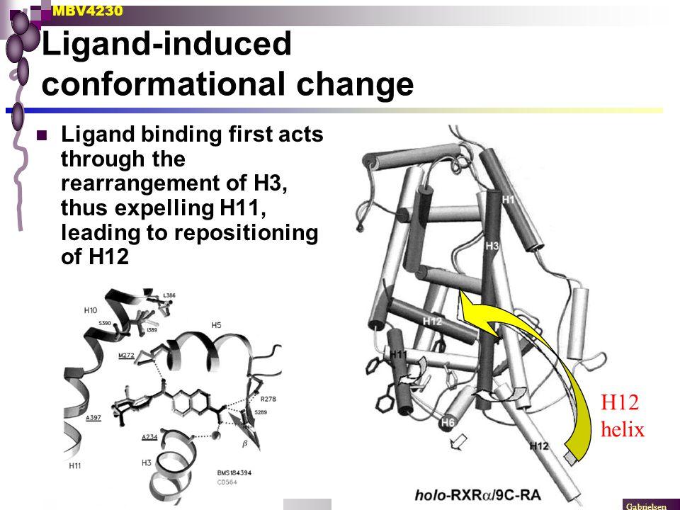 Ligand-induced conformational change