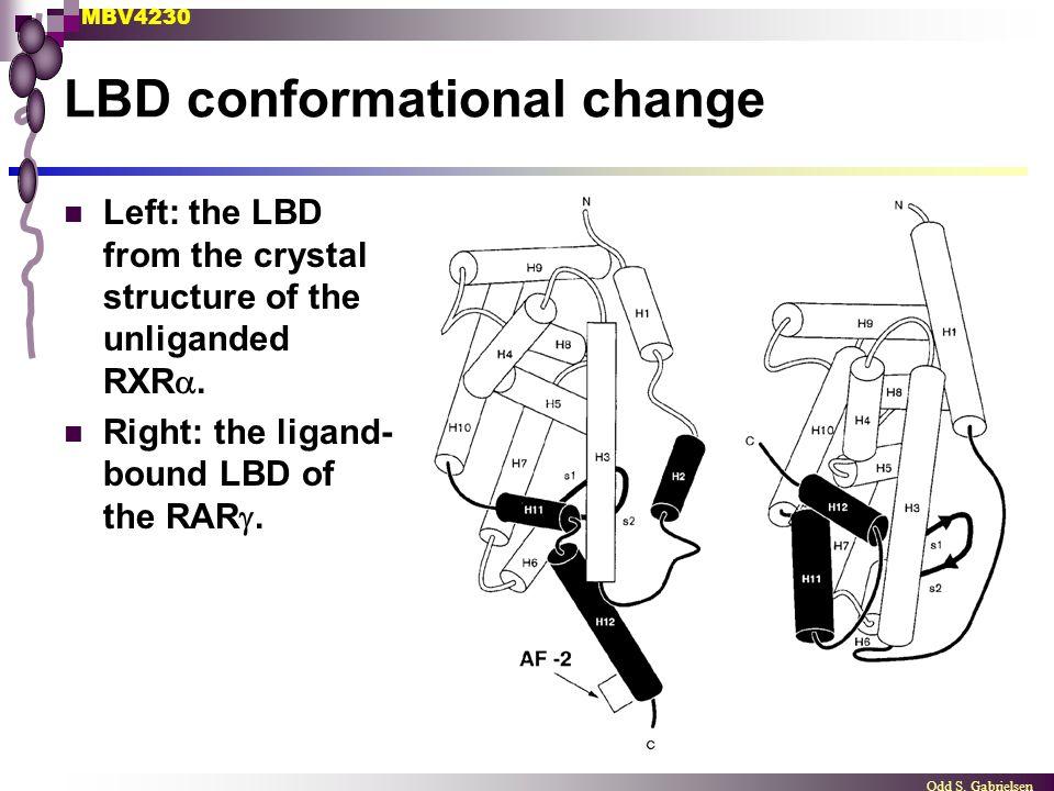 LBD conformational change