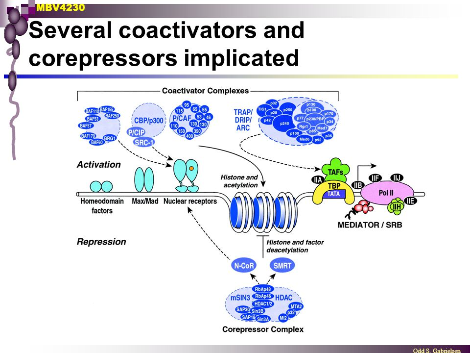 Several coactivators and corepressors implicated