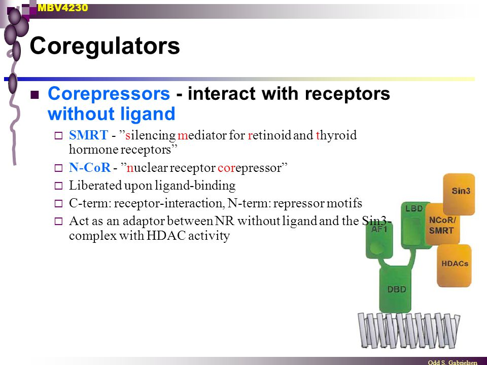 Coregulators Corepressors - interact with receptors without ligand