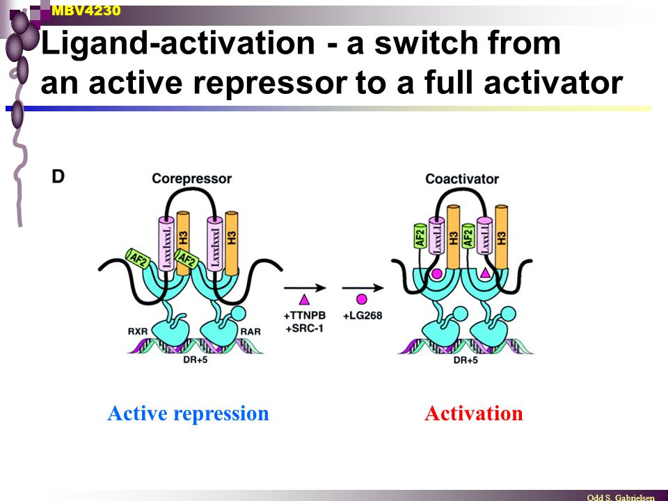 Ligand-activation - a switch from an active repressor to a full activator