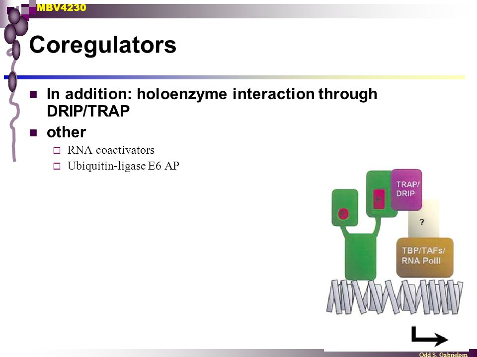 Coregulators In addition: holoenzyme interaction through DRIP/TRAP