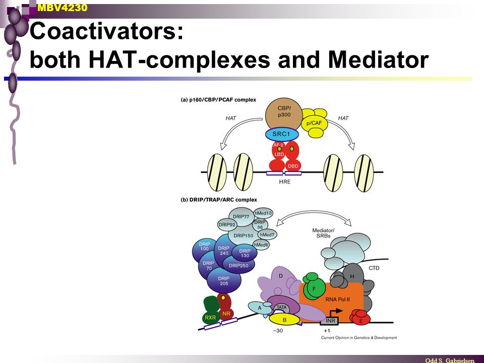 Coactivators: both HAT-complexes and Mediator