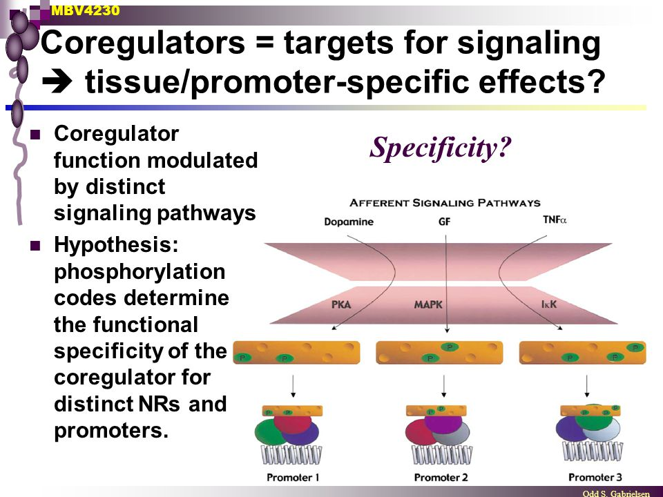 Coregulators = targets for signaling  tissue/promoter-specific effects
