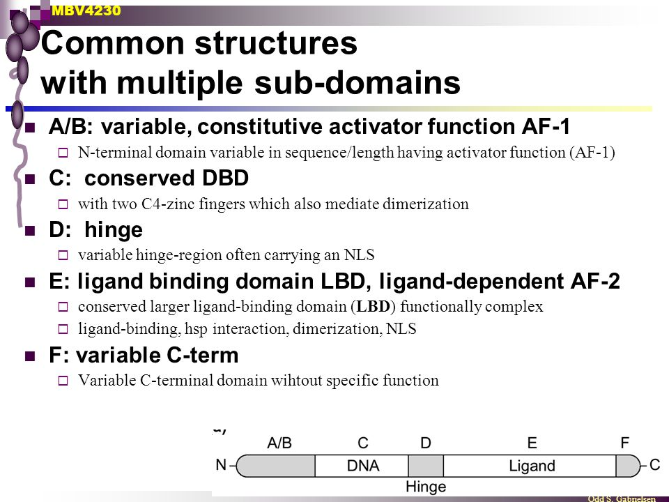 Common structures with multiple sub-domains