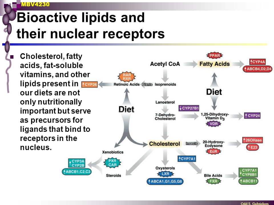 Bioactive lipids and their nuclear receptors
