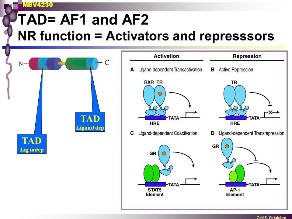 TAD= AF1 and AF2 NR function = Activators and represssors