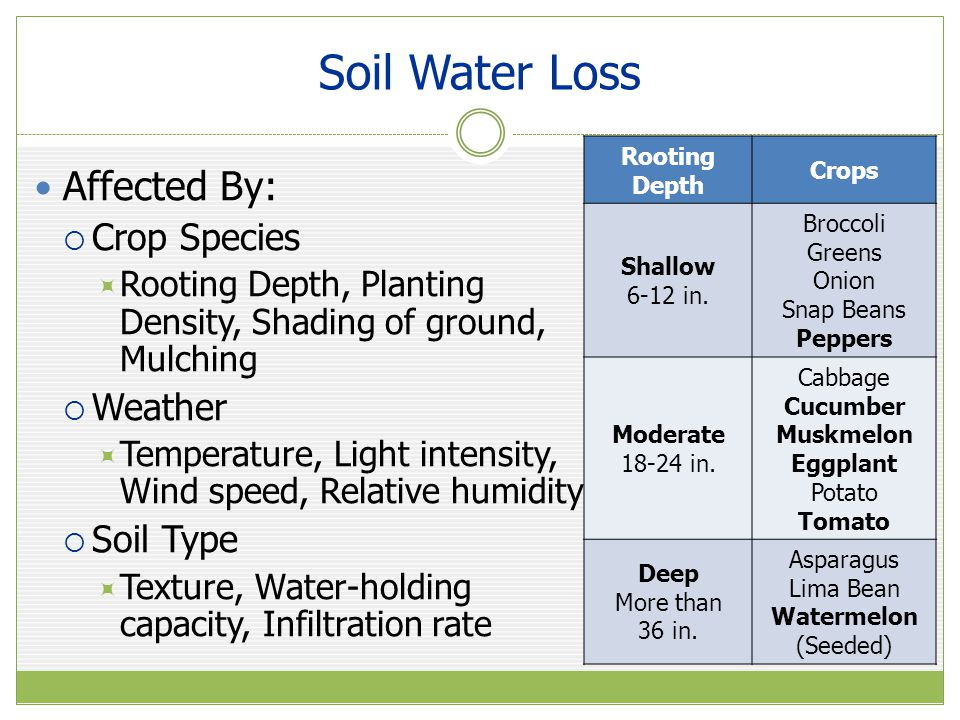 Soil Water Loss Affected By: Crop Species Weather Soil Type