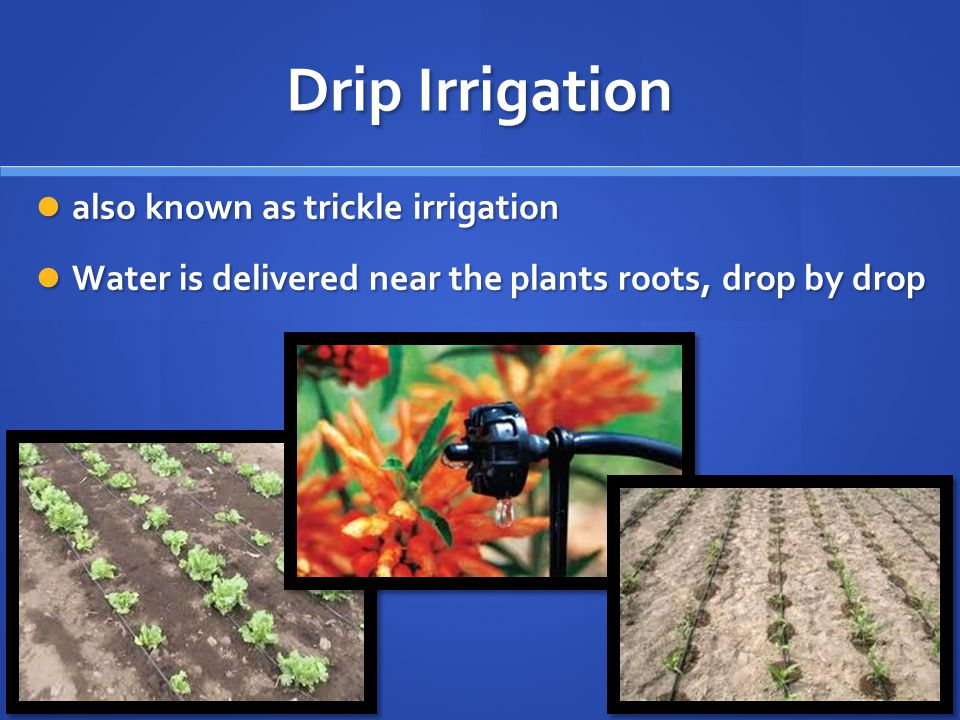 Drip Irrigation also known as trickle irrigation