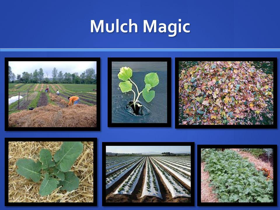 Mulch Magic