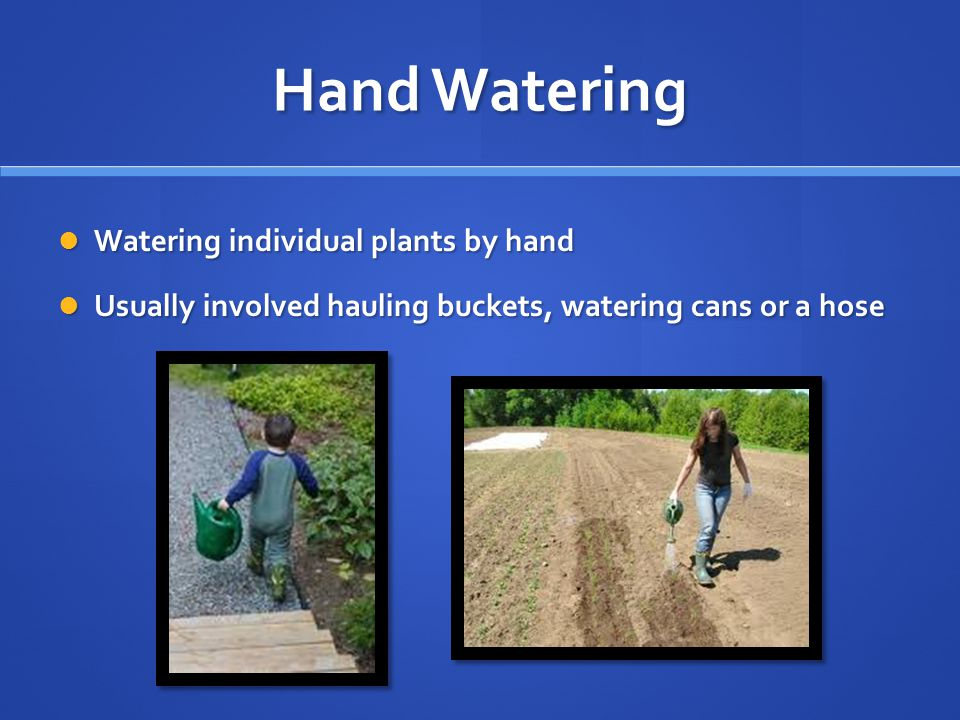 Hand Watering Watering individual plants by hand