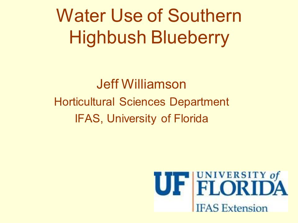 Water Use of Southern Highbush Blueberry