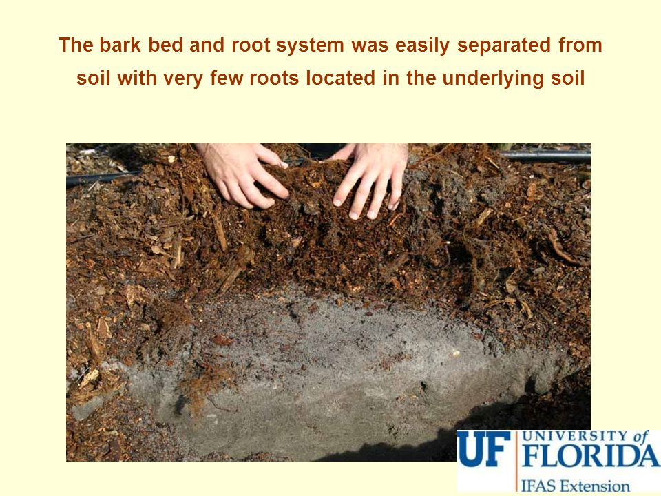 The bark bed and root system was easily separated from soil with very few roots located in the underlying soil