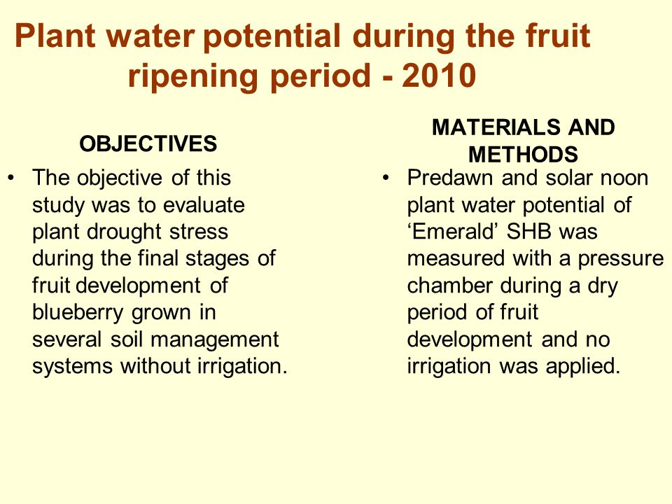 Plant water potential during the fruit ripening period - 2010