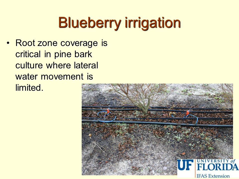 Blueberry irrigation Root zone coverage is critical in pine bark culture where lateral water movement is limited.
