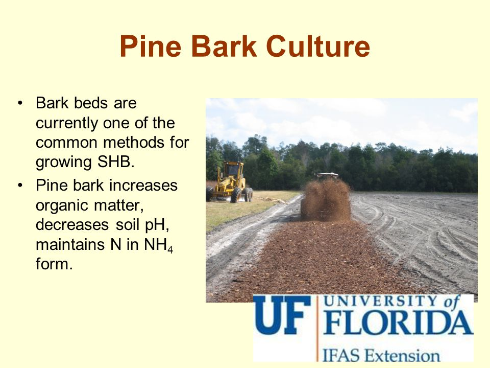 Pine Bark Culture Bark beds are currently one of the common methods for growing SHB.
