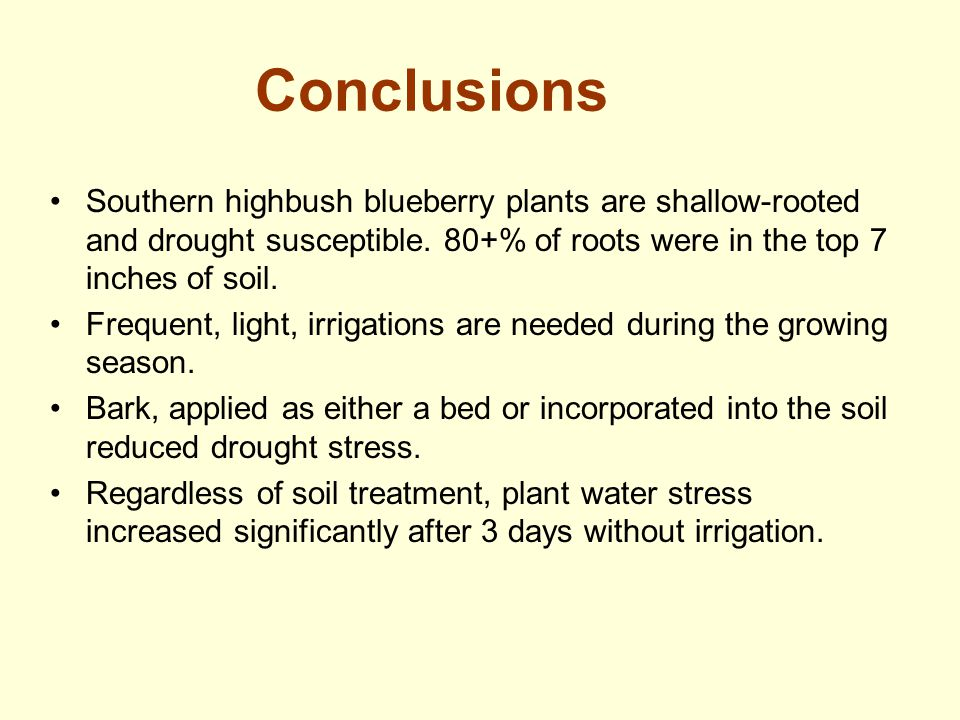 Conclusions Southern highbush blueberry plants are shallow-rooted and drought susceptible. 80+% of roots were in the top 7 inches of soil.