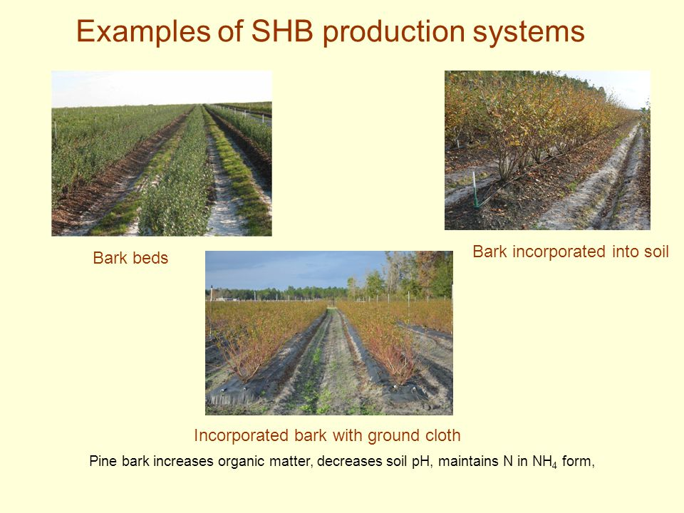Examples of SHB production systems