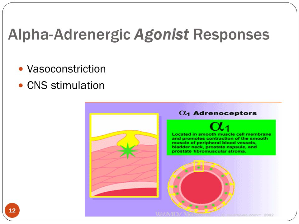 Alpha-Adrenergic Agonist Responses