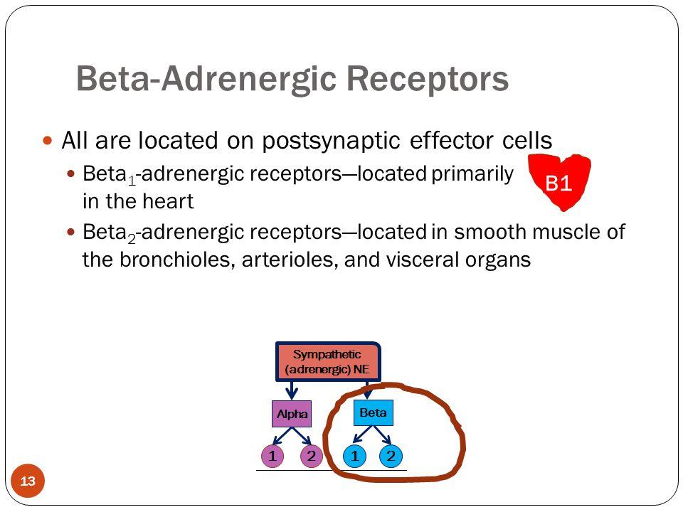 Beta-Adrenergic Receptors