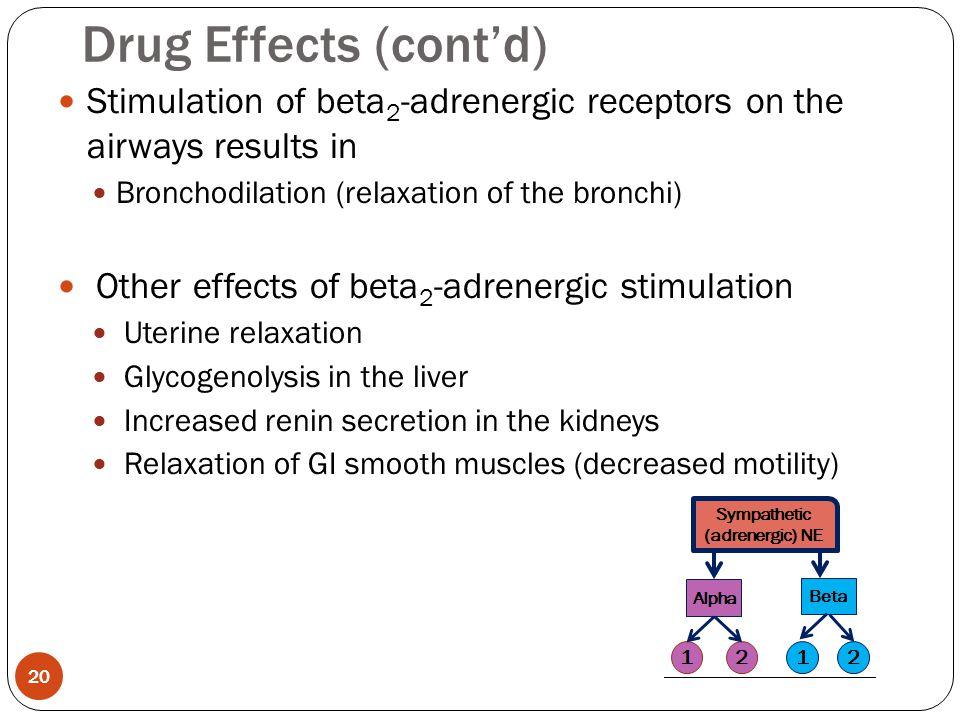 Drug Effects (cont'd) Stimulation of beta2-adrenergic receptors on the airways results in. Bronchodilation (relaxation of the bronchi)