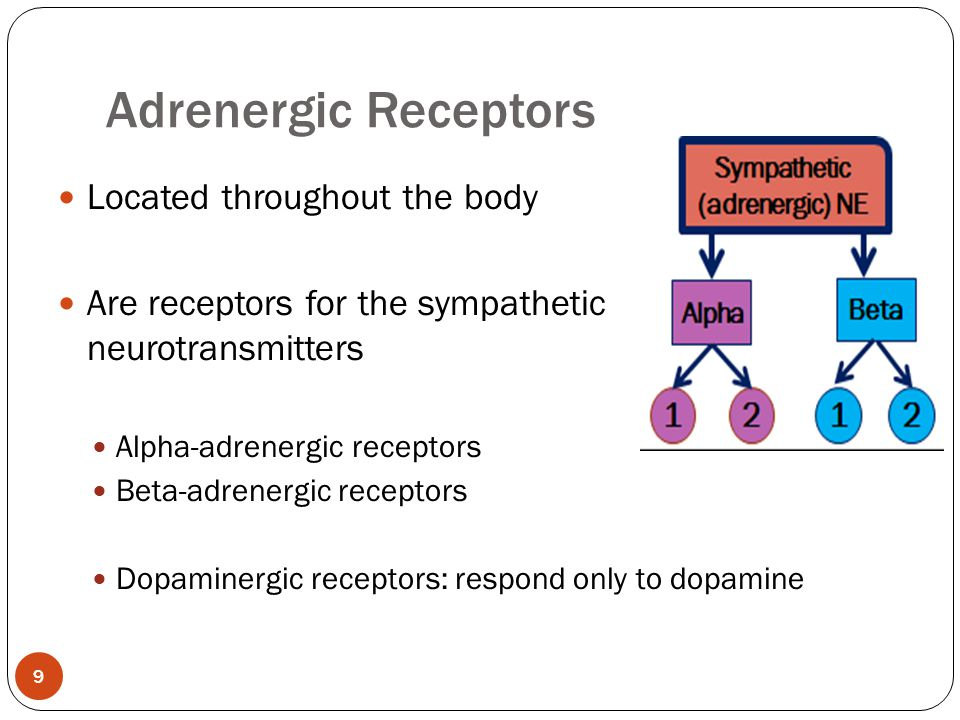 Adrenergic Receptors Located throughout the body
