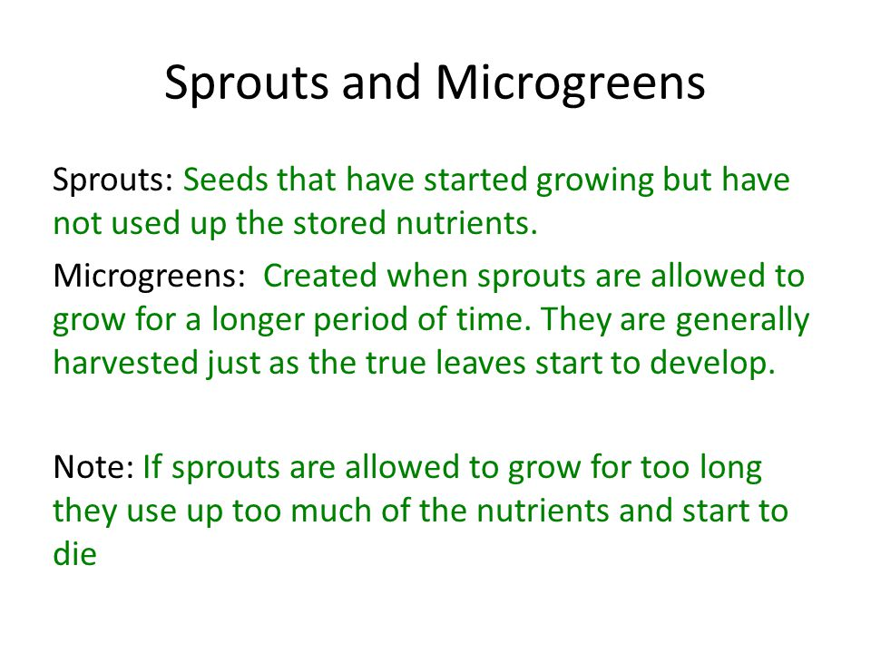 Sprouts and Microgreens