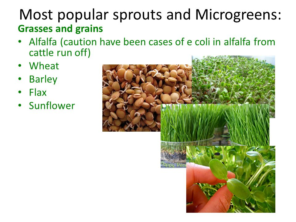 Most popular sprouts and Microgreens:
