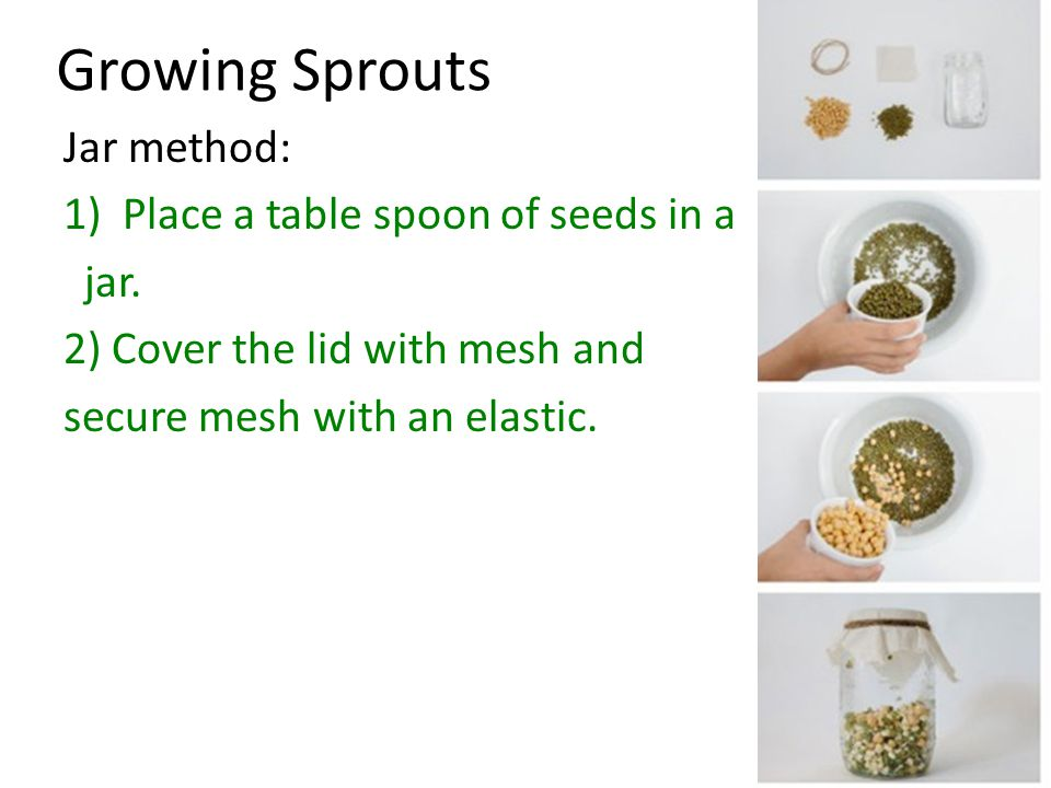 Growing Sprouts Jar method: Place a table spoon of seeds in a jar.
