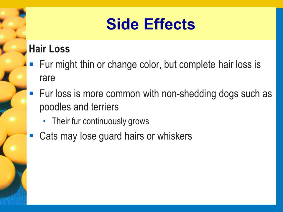 Side Effects Hair Loss. Fur might thin or change color, but complete hair loss is rare.