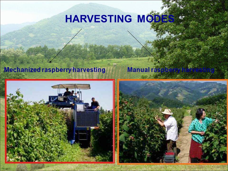 HARVESTING MODES Mechanized raspberry harvesting