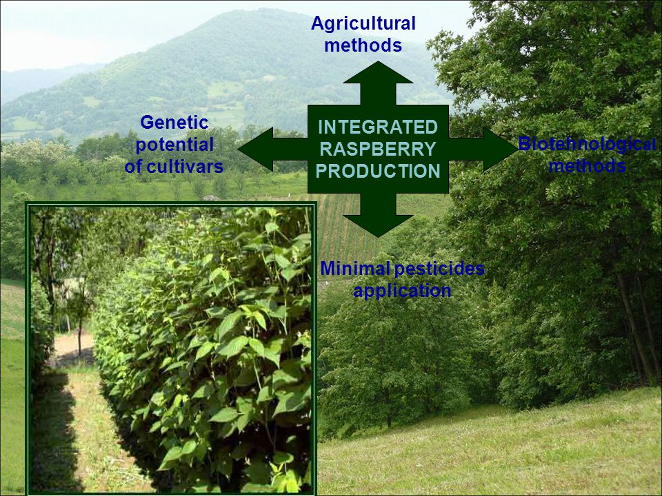 Minimal pesticides application