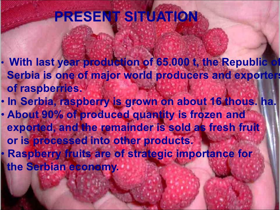 PRESENT SITUATION Serbia is one of major world producers and exporters