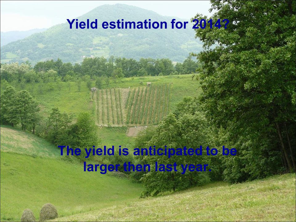 The yield is anticipated to be larger then last year.