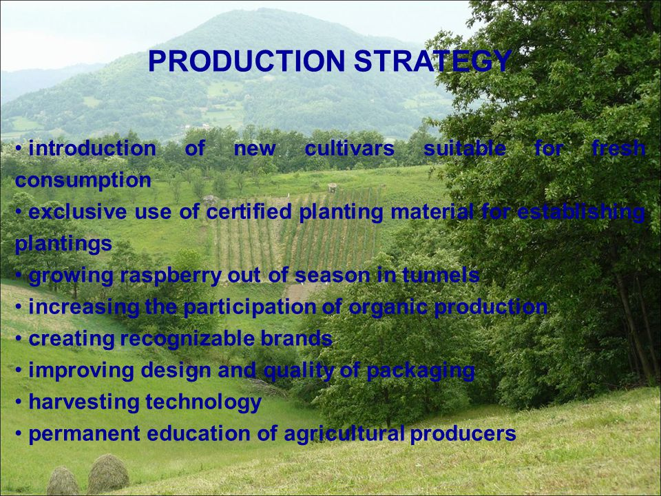 PRODUCTION STRATEGY introduction of new cultivars suitable for fresh consumption.