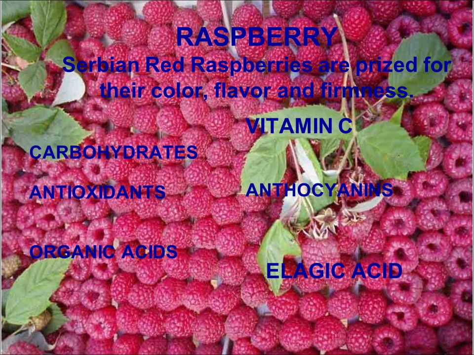 RASPBERRY Serbian Red Raspberries are prized for their color, flavor and firmness.
